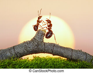two ants on sunset