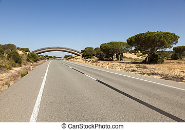 Road in Donana national park, Spain - Road with a wildlife...