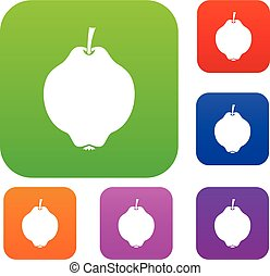Quince fruit set collection - Quince fruit set icon in...
