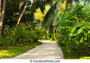 Pathway in tropical park
