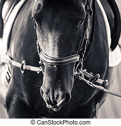 Horse on training closeup - Horse training on a cord,...
