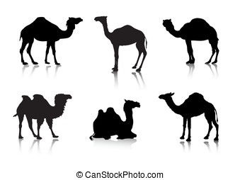 From a series Silhouettes Animals - Vector images of a camel...