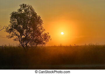 Photo with a summer sunrise and a tree.