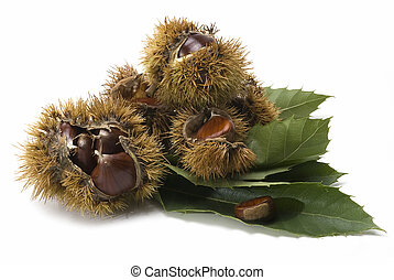 Chestnuts 9 - Some chestnuts with leaves and urchins...