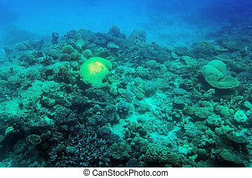 Coral reef underwater - Underwater view of coral reef, Red...