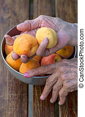 Hands of an old woman with apricots - Hands of the old woman...