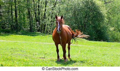 Beautiful horse in a meadow - Beautiful horse is standing on...