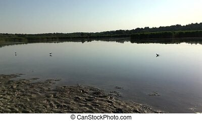 Birds on the pond in the early summer morning