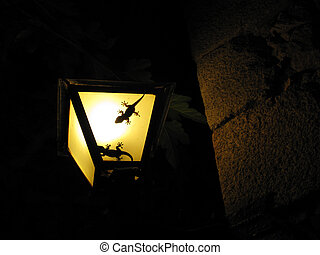 Two geckos in a lamp