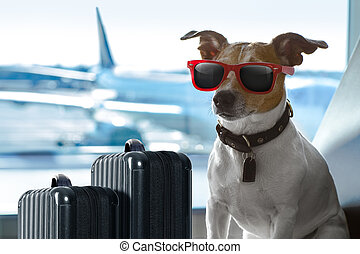 dog in airport terminal on vacation - holiday vacation jack...