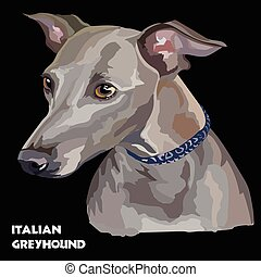 Italian Greyhound colorful vector portrait - Colored Italian...