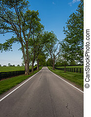 Tree Lined Country Road Through Horse Farm in Kentucky...