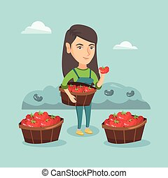 Young caucasian farmer collecting tomatoes. - Caucasian...