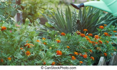 Watering flowers with a watering can at the yard