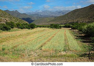 Rural landscape - South Africa