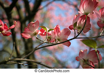 Pink Floral Tree in Blossom