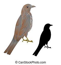 Thrush songbird wildlife bird vintage vector.eps