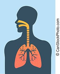 Lungs - Human silhouette with inflamed lungs vector...
