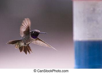 humming bird feeding - humming bird in flight getting ready...