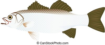 European bass cartoon vector illustration