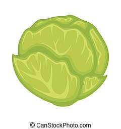 Green fresh cabbage - Vector illustration of green cabbage...