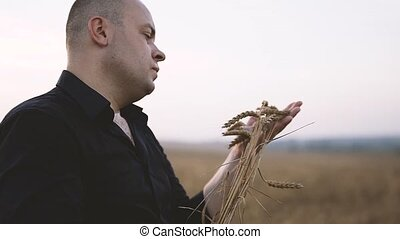 Spikes of Wheat in Men's Hands - Man Holds Wheat Spikes at...