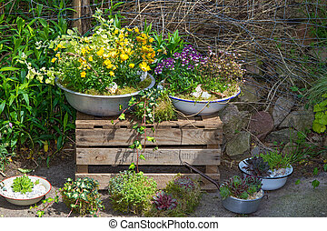 Several perennial plants pottet in old containers.