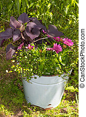 A old bucket with garden flowers.