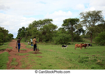 Cows - Uganda, Africa - Cow Farm in Uganda - The Pearl of...
