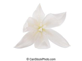 flor, Yuca, aislado