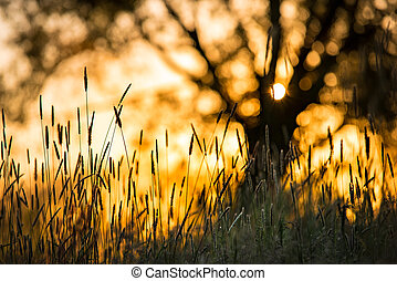 Sunrise rays on the meadow - Closeup view at meadow plants...