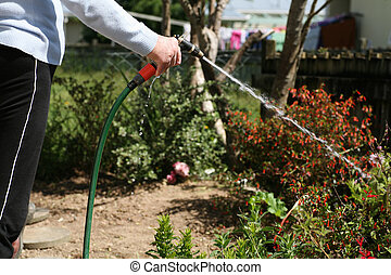 Arthritic hands watering garden - Living with pain series....