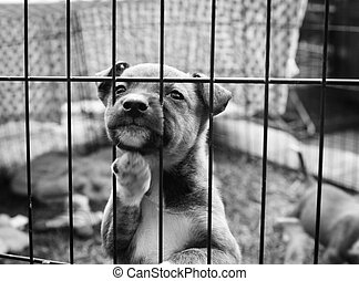Pup in a cage - Homeless animals series. Tiny pup looking...