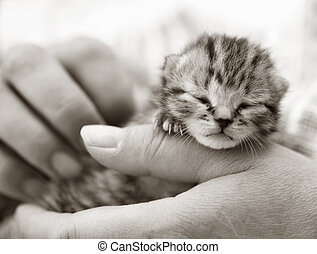 Newborn kitten in the hand - Homeless animals series Newborn...