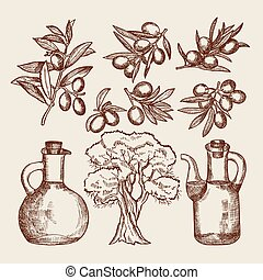 Olive oil in bottling. Olive tree and other hand drawn foods