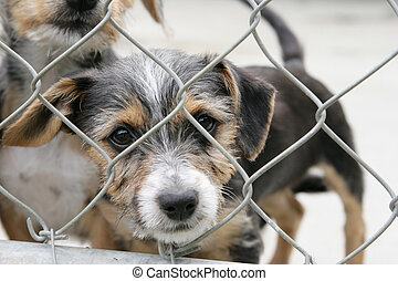 Pup in a pen - Homeless animals series. Cute scruffy pup...