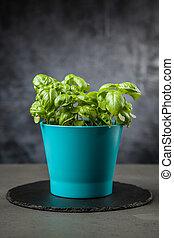 Home grown basil - Home grown fresh basil in a vase