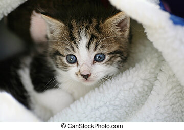 Cute kitten in a bed