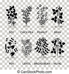 Legumes plants with leaves, pods and flowers. Silhouette...