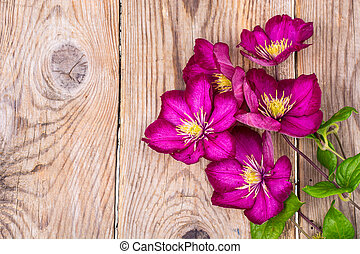 Garden clematis on wooden table