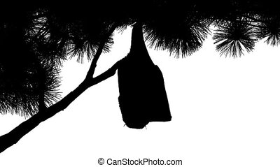 Bat Hanging Off Branch Silhouette - Silhouette of a bat...
