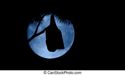Bat Hanging Off Branch In Front Of Full Moon - Bat hanging...