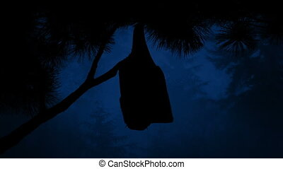Bat Hangs Off Tree In The Forest At Night - Bat hanging off...