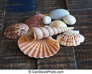 close up shells and pebbles still life on a old plank wooden desk