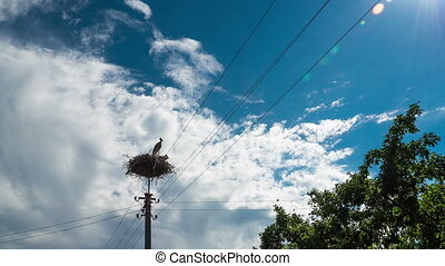 Storks Sitting in a Nest on a Pillar High Voltage Power Lines in Village. Time Lapse
