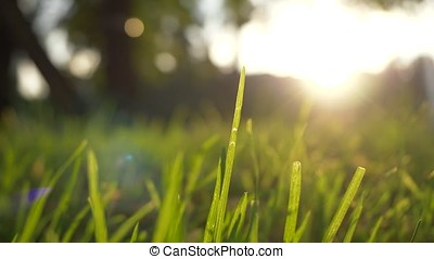 Summer grass meadow motion blur of pleasant wind with bright sunlight, sunny spring background