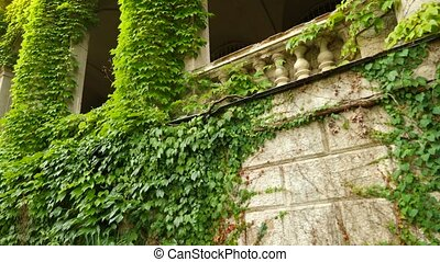 The colonnade of an ancient castle covered with ivy. 4K....