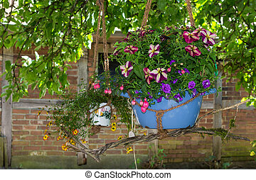 A hanging basket with fuchsia and petunia homeplants. - A...