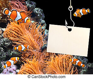 Clown fish and empty sheet of a paper on a fishing hook
