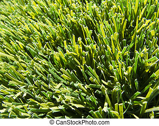 Artificial Grass - Fake Grass used on sports fields for...